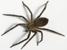araignee-se-debarrasser-des-araignees-comment-faire-partir-araignee-danger-araigner-chasser-araignees.jpg