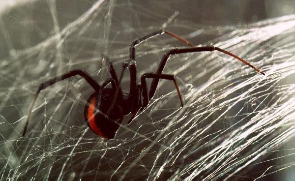 spider-redba1942-dbeca.jpg